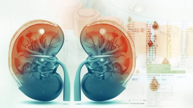 malattia cronica renale microbiota