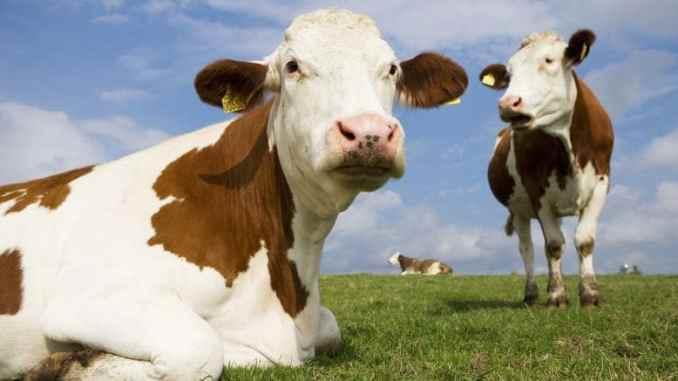 animali da allevamento microbiologia