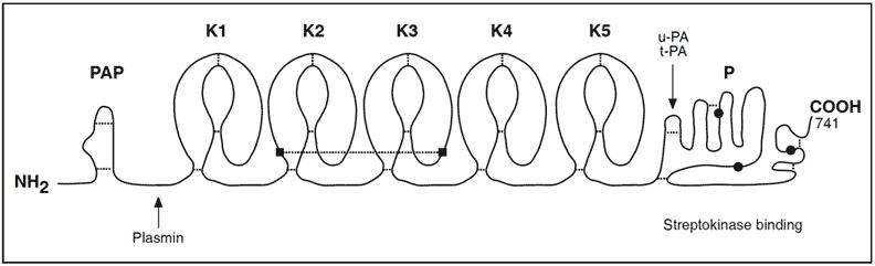 struttura del plasminogeno