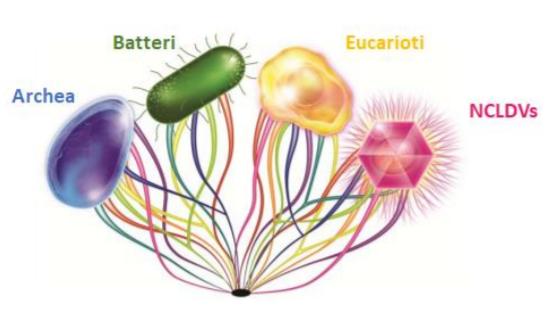 Rappresentazione del modello proposto dei quattro domini della vita