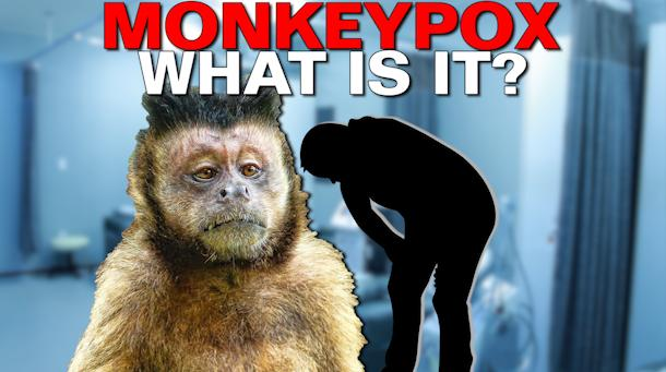 virus delle scimmie