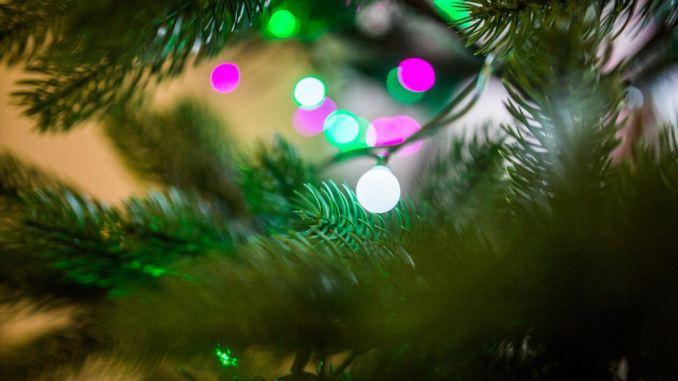 albero di Natale e microrganismi