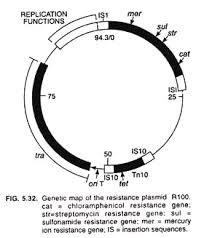 Mappa genica del plasmide R