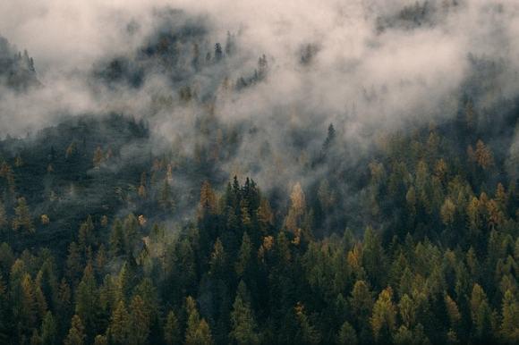 Foresta temperata