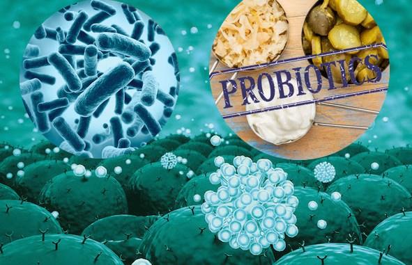 flora batterica, probiotici e immunità
