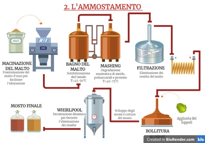 Schema del processo di ammostamento: dal malto d'orzo al mosto di birra, pronto per la fermentazione