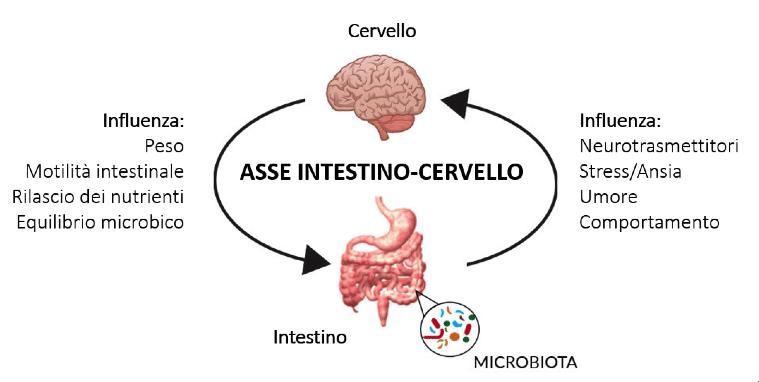 i batteri gastrointestinali condizionano lo stato emotivo