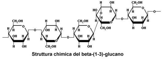 I beta glucani sono molecole sia ad azione modulatoria sul sistema immunitario che ad azione prebiotica.