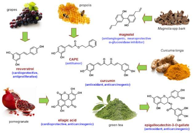 Alcuni dei più comuni polifenoli vino microbiota intestinale