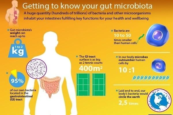 """i batteri che abitano il corpo umano vanno a costituire il """"microbiota umano"""""""