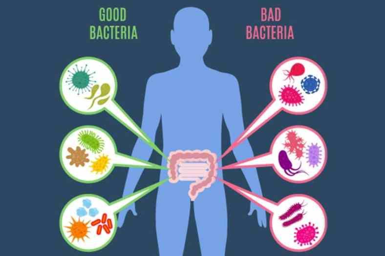 Illustrazione del microbiota umano