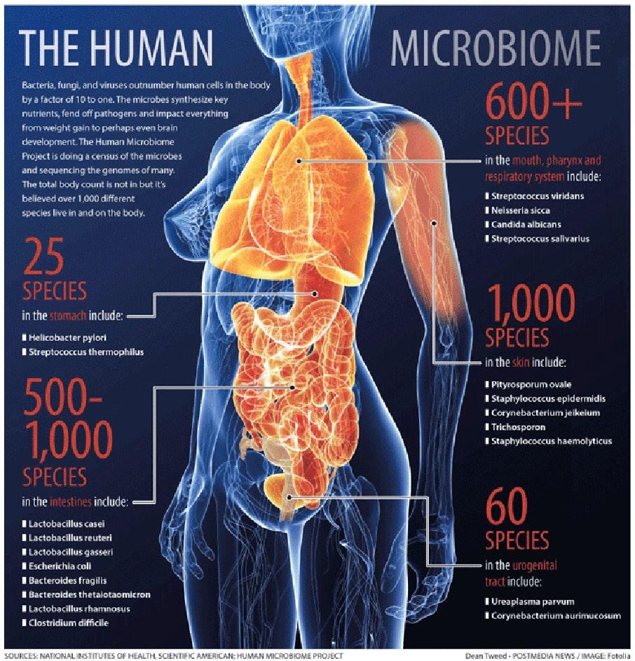 Figura 2 - Illustrazione della varietà delle specie batteriche presenti nel corpo umano