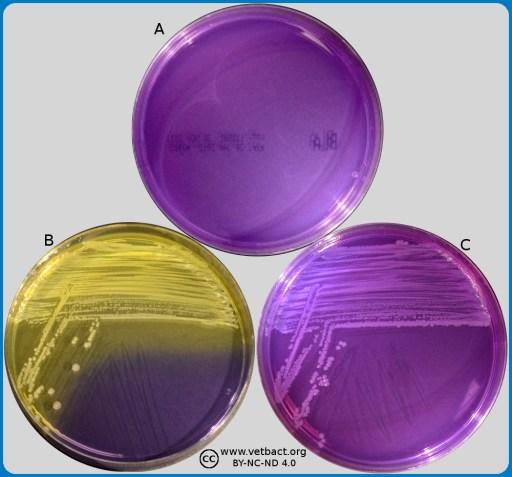 risultati test enterobacteriaceae