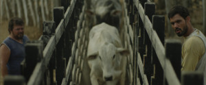 Neon-Bull-Boi-Neon-Gabriel-Mascaro