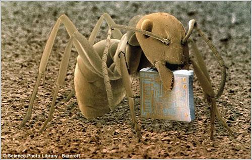 Hormiga y microchip