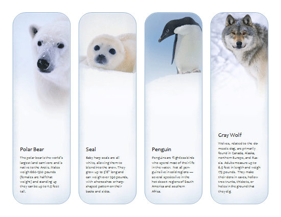 animals template microsoft publisher template ms office templates