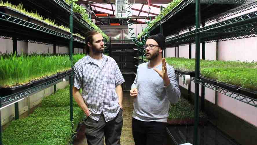 Where to sell microgreens for profit