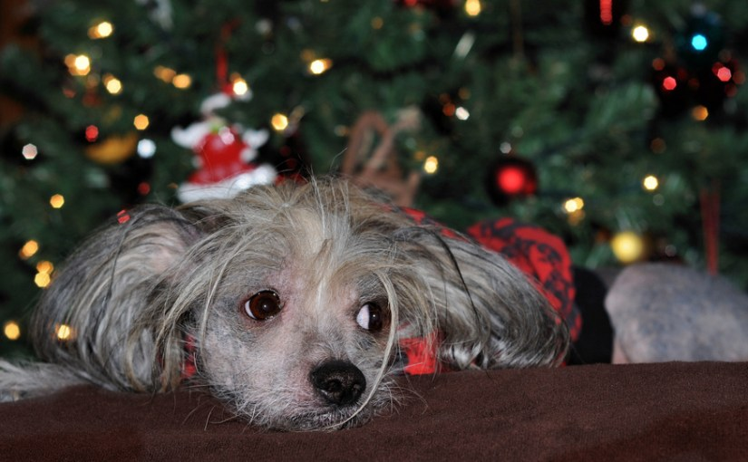 Sad dog near a christmas tree