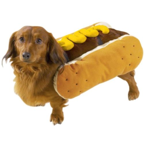 dachshund in hot dog costume