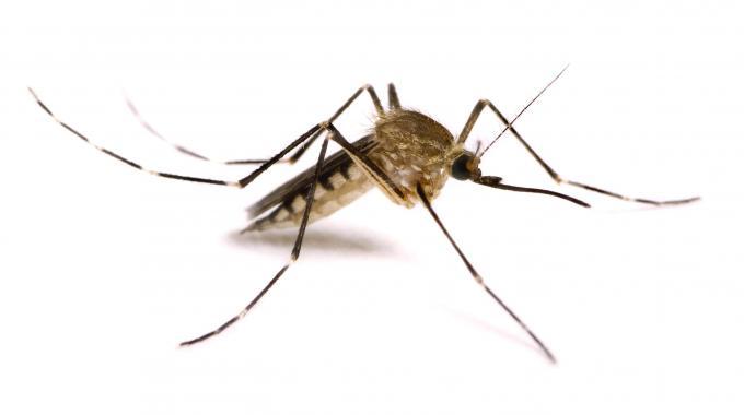 aumento di insetti