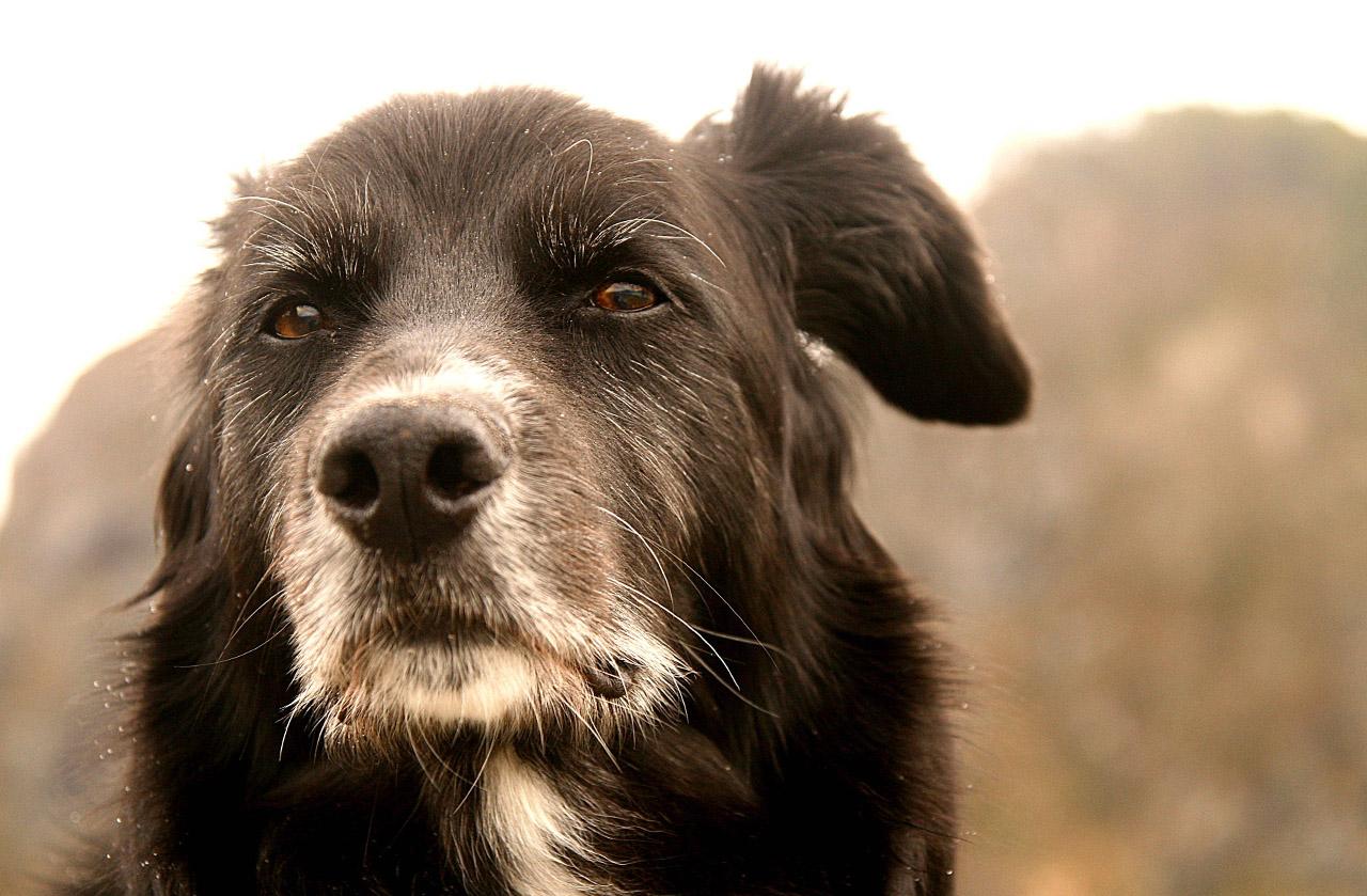 Older Dog