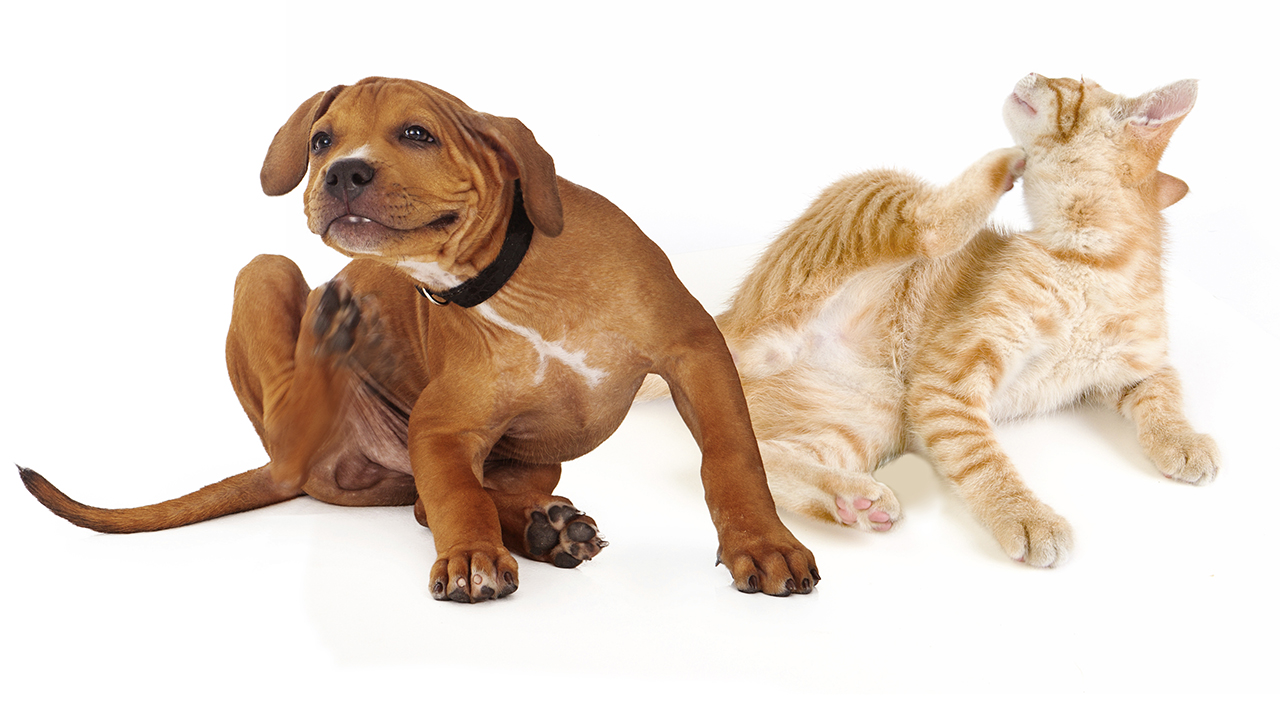 Is your Pet's Itching and Scratching Keeping You Up at Night?