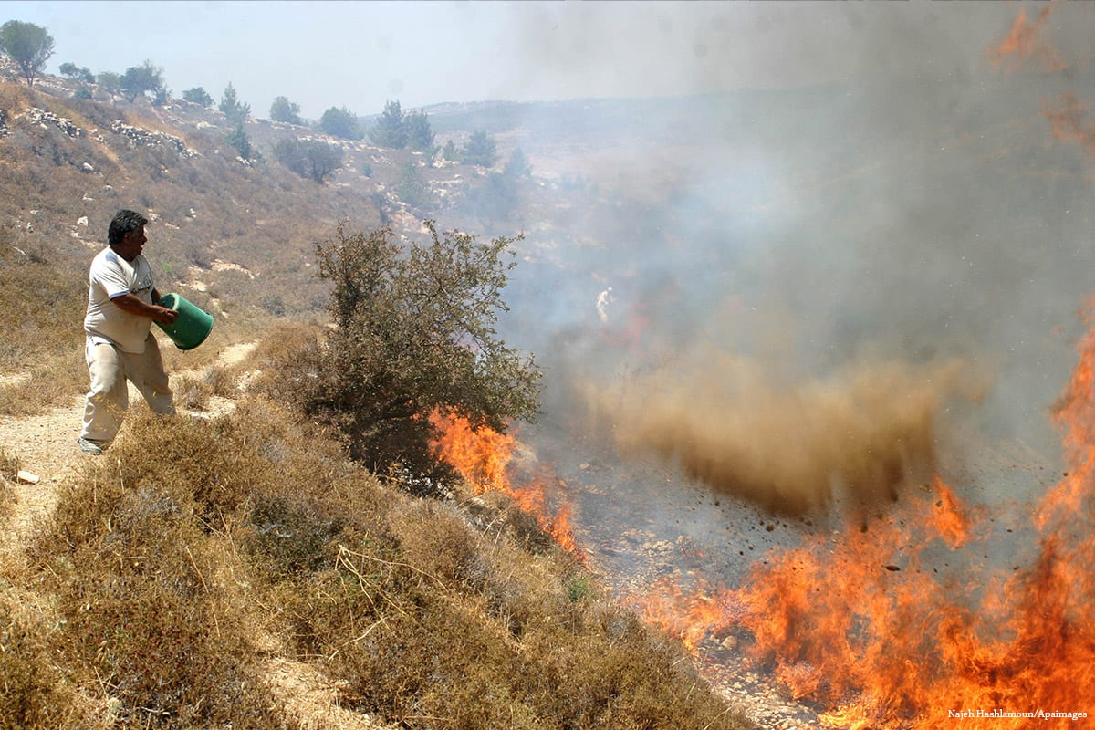 In big fires across Israel, 12 arrested as suspects