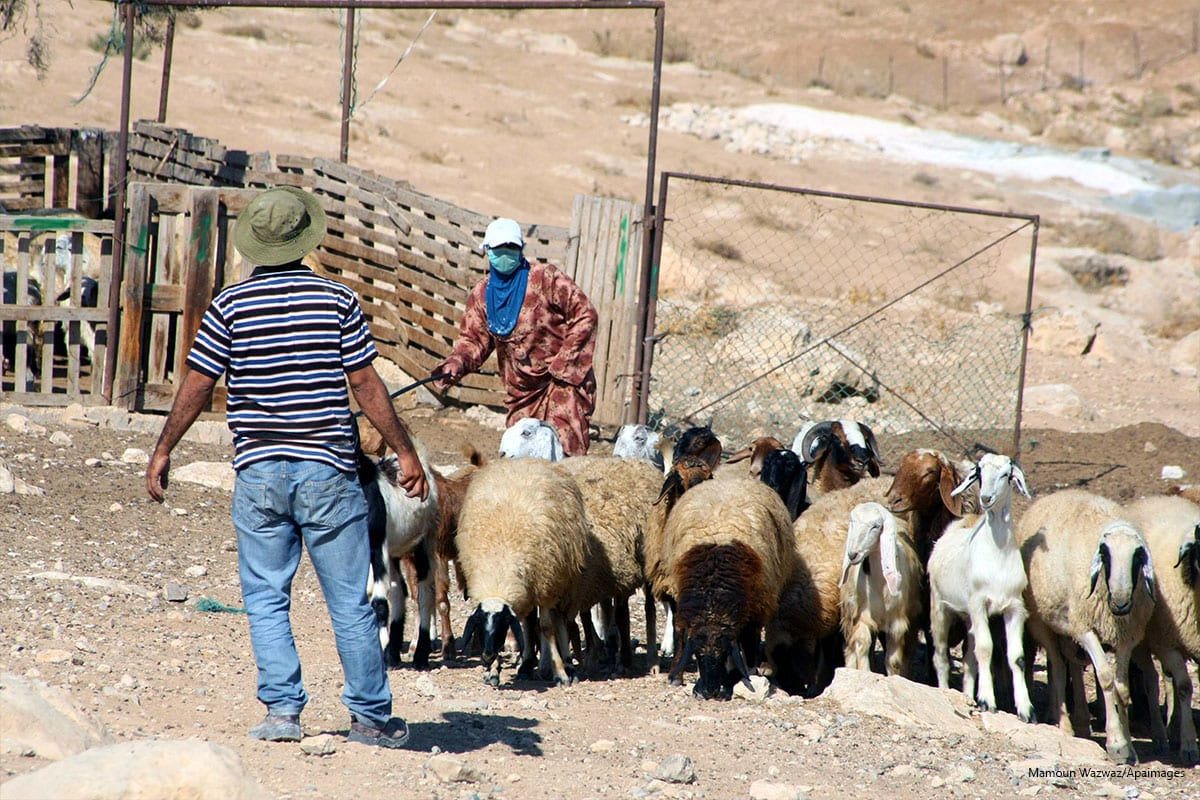 A Palestinian shepherd leads his sheep in the village of Jimba southern Yatta, near the West Bank City of Hebron, on 01 October 2013 [Mamoun Wazwaz/Apaimages]