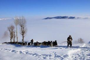 MUS- TURKEY- Baaa, it's cold