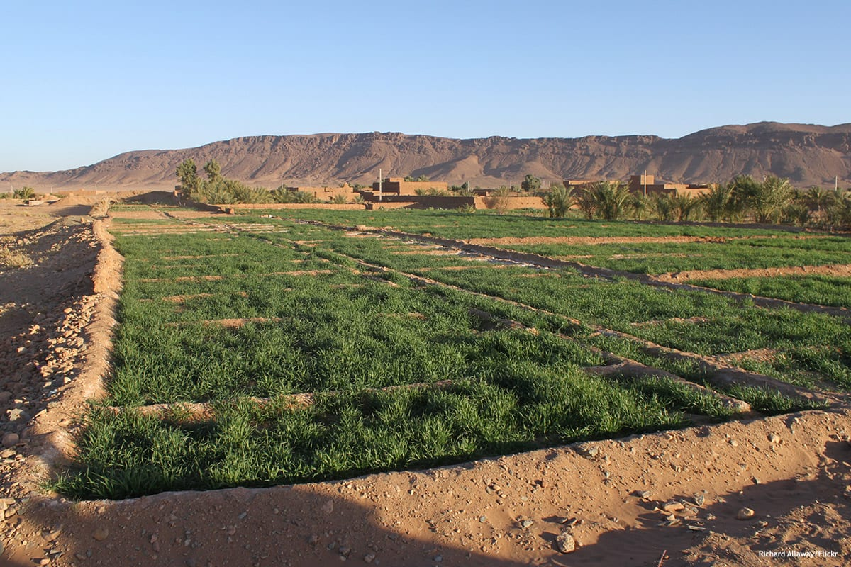 Image of desert agriculture in Morocco [Richard Allaway/Flickr]