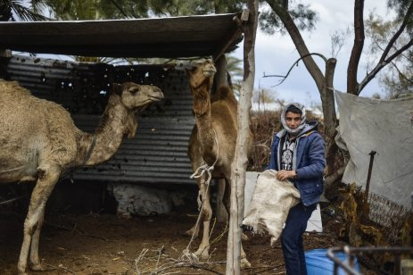 GAZA CITY, GAZA - FEBRUARY 12: A shepherd Bedouin boy with camels is seen near the wreckages and their makeshift huts -without water and basic living necessities, at Gaza Valley in Gaza City, Gaza on February 12, 2017. After become homeless, many Bedouins try to continue their lives under hard conditions. ( Mustafa Hassona - Anadolu Agency )