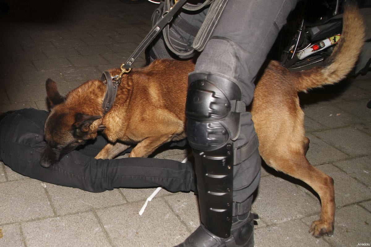 A police dog attacks a man as Dutch police disperse Turkish citizens gathering outside Turkish consulate in Rotterdam to protest Dutch government after its ban on ministers, in Rotterdam, Netherlands on March 12, 2017 [Mesut Zeyrek / Anadolu Agency]