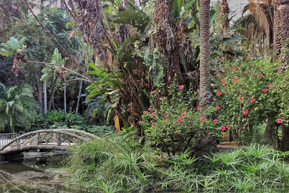 Image of the many plants found in Botanical Garden of El Hamma in Algiers, Algeria