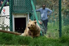 Image of Lula the bear after being rescued from a zoo Mosul [Four Paws UK]