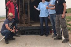 Image of the Simba the lion and Lula the bear in a cage after arriving to Jordan [Four Paws UK]