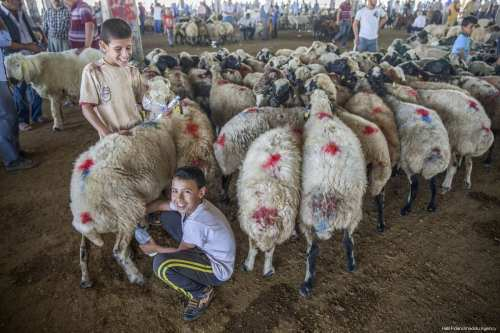 """Children play with a sheep at a livestock market as the preparations continue for the upcoming Muslim sacrificial festival """"Eid al-Adha in Sanliurfa, Turkey on 18 August, 2017 [Halil Fidan/Anadolu Agency]"""