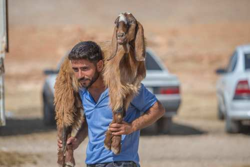 """Sellers wait with sacrificial animals for the customers at a livestock market ahead of the upcoming Muslim sacrificial festival """"Eid al-Adha in Sanliurfa, Turkey on 18 August, 2017 [Halil Fidan/Anadolu Agency]"""