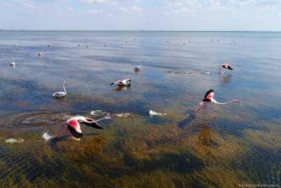Do you know why Flamingos are pink?Flamingos on the Akyatan Lagoon in Adana, Turkey on 27 September, 2017 [Eren Bozkurt/Anadolu Agency]
