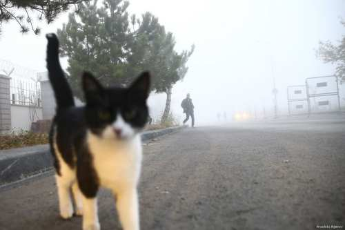Did curiosity really kill the cat? An intrigued cat is seen during the foggy morning in Ankara
