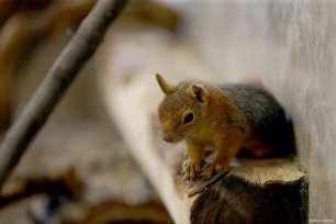 Wild animals of the Karatay Municipality Zoo