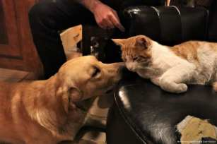 A cat and a dog are seen at a cafe belonging to Turkish man, Suat Kilic, who allows stray animals to enter his cafe [Mustafa Ünal Uysal/Anadolu Agency]