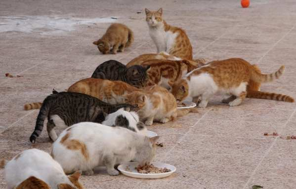 Stray kittens are seen at a cat shelter, which hosts 150 stray cats in Aleppo, Syria on 7 June 2018 [Adnan Alemam/Anadolu Agency]