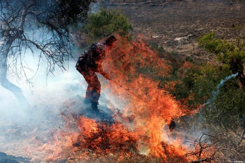 A Palestinian policeman uses a flap to put out a fire in an olive grove and field, which according to the local Palestinian villagers was started by settlers from a near by Jewish settlement close to the West Bank village of Burin on September 5, 2011 [Wagdi Eshtayah / ApaImages]