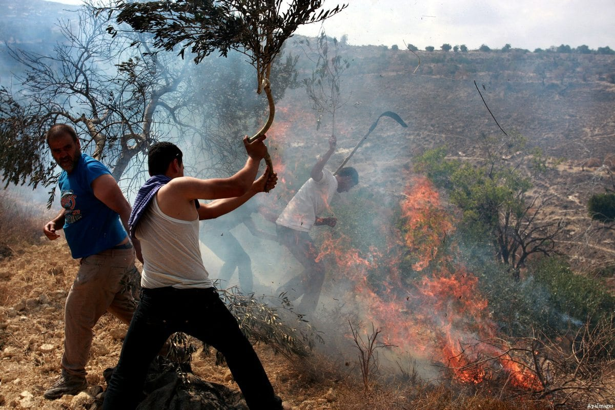 Palestinians try to extinguish a fire in an olive grove after it was set alight by settlers from a near by Jewish settlement close to the West Bank village of Burin [Wagdi Eshtayah/Anadolu Agency]