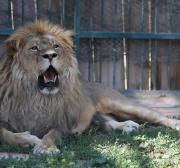 'Operation Simba' launched in Baghdad