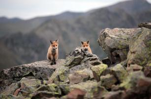 A red fox is seen at Kackar Mountains National Park, which conserves and develops wildlife, in Camlihemsin district of Rize, Turkey on 28 September, 2018 [Ali Kemal Atik/Anadolu Agency]