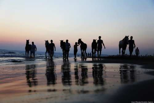 Horse-riding trainers swim with their horses at sea during sunset in Turkey on 5 September 2018 [Ozan Efeoğlu/Anadolu Agency]