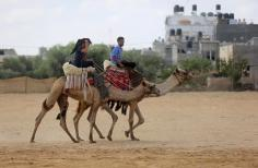 Palestinians ride horses and camels during a heritage festival at the Israel-Gaza border, in Khan Younis in the southern Gaza Strip10 October, 2018. [Ashraf Amra/Apaimages]