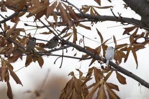 This rare sparrow was spotted in Altinpark in Ankara, 9 November 2018 [Mustafa Kamacı/Anadolu Agency]
