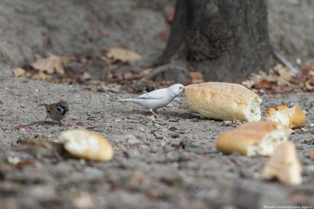 See this little chap snacking on some bread in the park! Ankara, 9 November 2018 [Mustafa Kamacı/Anadolu Agency]